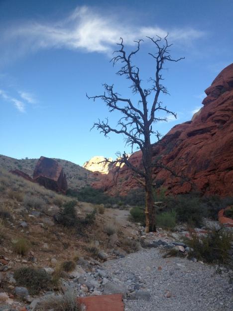 Redrock Tree